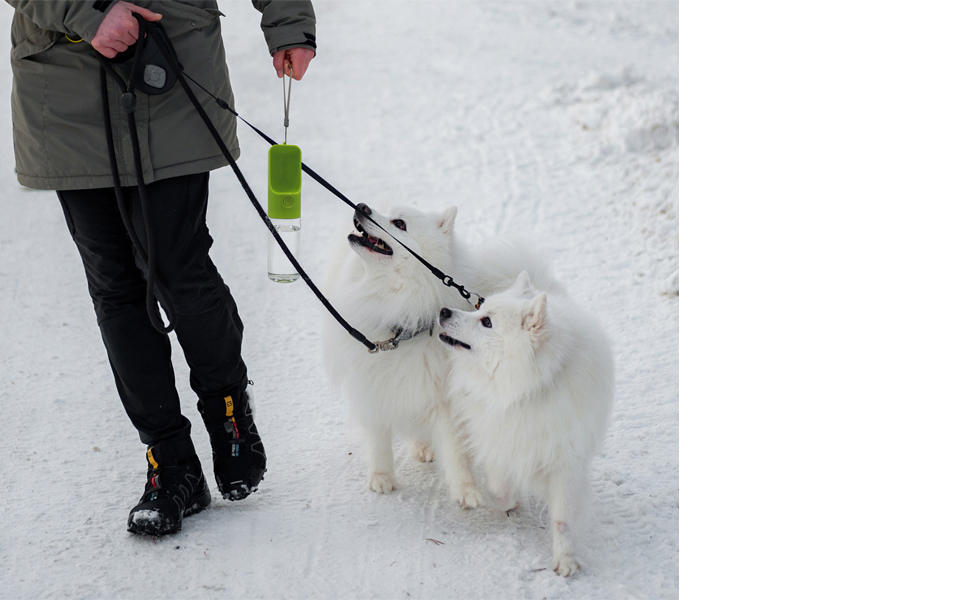 Two little white dogs on a winter hike with their owner, looking to get some water.