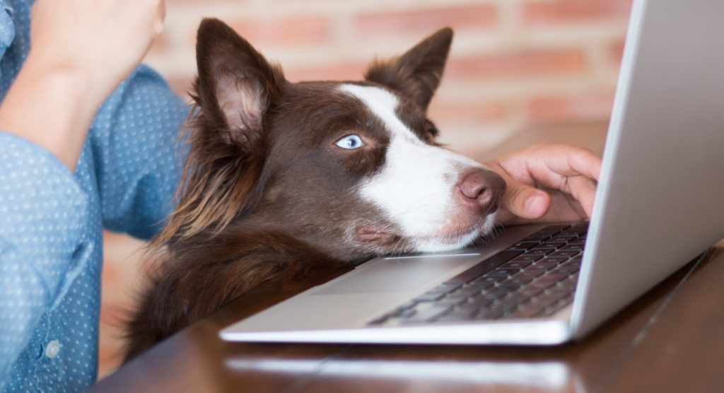 Dog and owner browsing the internet on their laptop. filling out a contact us form.